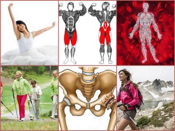 Можно ли заниматься скандинавской ходьбой при артрозе коленного и коксартрозе тазобедренного суставов