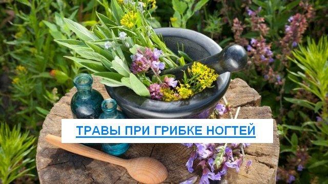 Толстянка от грибка ногтей: рецепты, отзывы