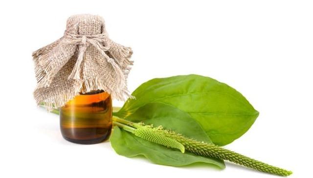 Лечение лямблиоза у взрослых - медикаментозное лечение и лечение народными средствами