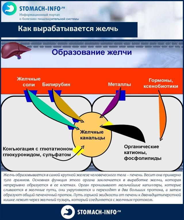 Желчевыводящие препараты - классификация, показания, как принимать