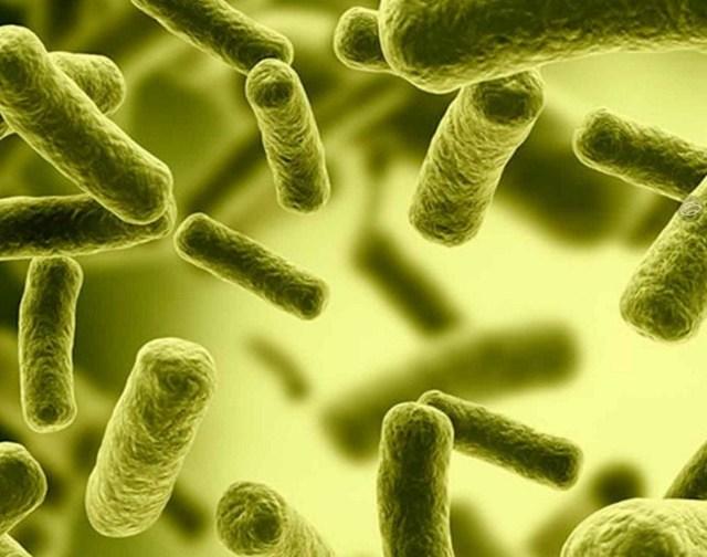 Хеликобактер пилори: как вылечить? Самые эффективные препараты и профилактика
