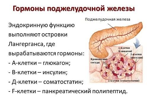 Гормоны поджелудочной железы и их функции, возможные проблемы